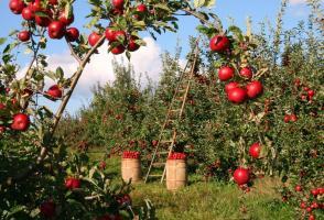 Gyümölcsvadász blog Szedd és/vagy vedd magad akciók a Gyümölcsvadászon