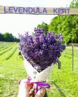 Szedd magad Levendula, Zalaegerszeg